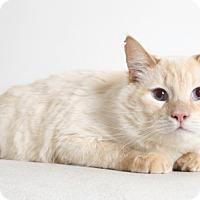 Adopt A Pet :: Mozart - Redding, CA