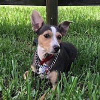 Adopt A Pet :: Giavanna - Davie, FL