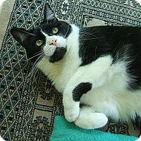 Adopt A Pet :: Bobo - Lenhartsville, PA