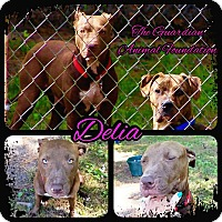 Adopt A Pet :: Delia - Greenville, NC