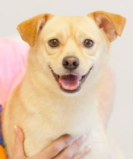 Mixed Breed (Medium) Mix Dog for adoption in Cartersville, Georgia - Bosley