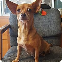 Adopt A Pet :: Honey - Okeechobee, FL