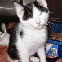 Adopt A Pet :: Calypso - Waupaca, WI