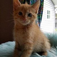 Adopt A Pet :: Dorito - Seaford, DE