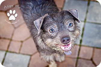 Terrier (Unknown Type, Small) Mix Dog for adoption in Medford, New Jersey - Ramon