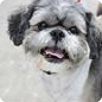 Adopt A Pet :: Kody - Hilliard, OH