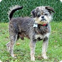 Adopt A Pet :: Pop - Port Washington, NY
