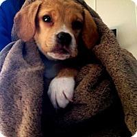 Adopt A Pet :: Taylor - Carey, OH
