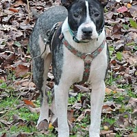 Adopt A Pet :: Barney - Brentwood, TN