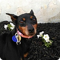 Adopt A Pet :: Hope - Syracuse, NY
