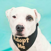 Adopt A Pet :: JOE! - Redondo Beach, CA