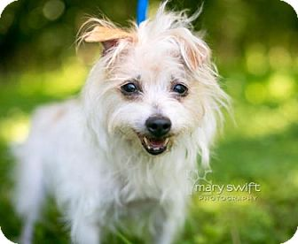 Terrier (Unknown Type, Small) Mix Dog for adoption in Reisterstown, Maryland - Daisy