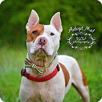 Adopt A Pet :: Zach - Fort Valley, GA