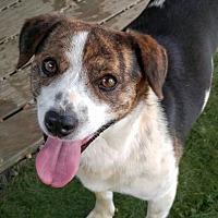 Adopt A Pet :: Huckabee - Spartanburg, SC