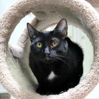 Adopt A Pet :: Jolly - St. Petersburg, FL
