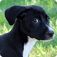 Adopt A Pet :: Janie ~ meet me! - Glastonbury, CT