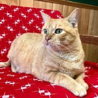 Adopt A Pet :: Marigold - Maryville, MO