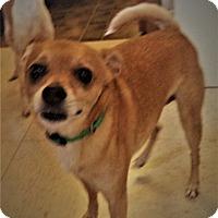 Adopt A Pet :: Peanut #1170x - Nixa, MO