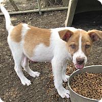 Adopt A Pet :: Baker - Godley, TX