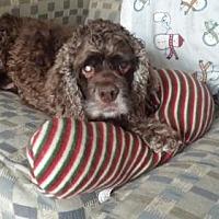 Adopt A Pet :: Tanner - Livonia, MI