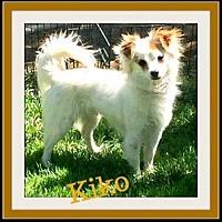 Adopt A Pet :: Kiko - Rancho Cucamonga, CA