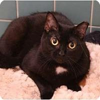 Adopt A Pet :: Arlington - Cincinnati, OH