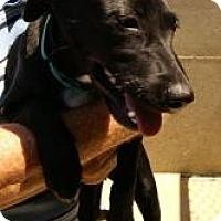Labrador Retriever Mix Dog for adoption in Oakland, Arkansas - Fenton