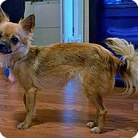 Adopt A Pet :: NINA - AUSTIN, TX