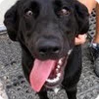 Adopt A Pet :: Tabitha - Council Bluffs, IA