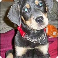 Adopt A Pet :: Brusier - Sandston, VA