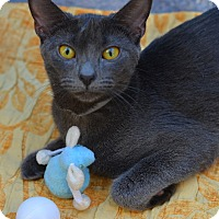 Adopt A Pet :: Julie - Brooklyn, NY