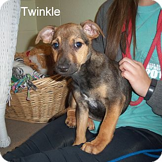 Black Mouth Cur/Shepherd (Unknown Type) Mix Puppy for adoption in Slidell, Louisiana - Twinkle