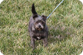 Shih Tzu/Pekingese Mix Dog for adoption in Fairmount, Georgia - Eloise