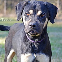 Adopt A Pet :: Teddy - Washington, GA