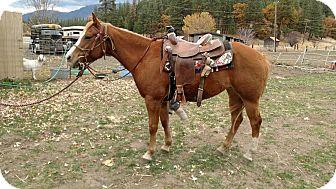 Quarterhorse Mix for adoption in Greenville, California - Macie