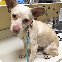 Adopt A Pet :: Winter - Oak Ridge, NJ