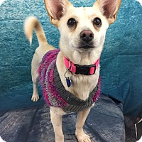 Adopt A Pet :: Sadie - Lake Elsinore, CA
