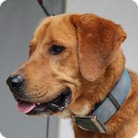 Adopt A Pet :: Harry - Harrisonburg, VA