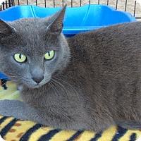 Adopt A Pet :: Mercury - Mt Pleasant, PA
