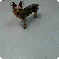 Adopt A Pet :: SKIPPY - Tulsa, OK