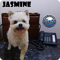 Adopt A Pet :: Jasmine - Arcadia, FL