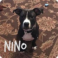 Adopt A Pet :: Nino - Des Moines, IA