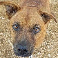 Adopt A Pet :: Vicki Jane - House Springs, MO