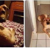 Adopt A Pet :: Rex - Blackstock, ON