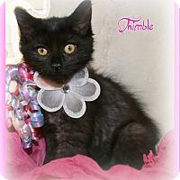 Adopt A Pet :: Thimble - Shippenville, PA