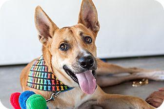 Labrador Retriever Mix Dog for adoption in Nanaimo, British Columbia - Buddy