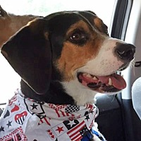 Adopt A Pet :: Buddy *Adopt* - Fairfax, VA
