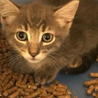 Adopt A Pet :: Razzles - Barco, NC
