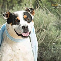 Adopt A Pet :: ROCKY - Albuquerque, NM