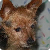 Adopt A Pet :: Wynn - Antioch, IL